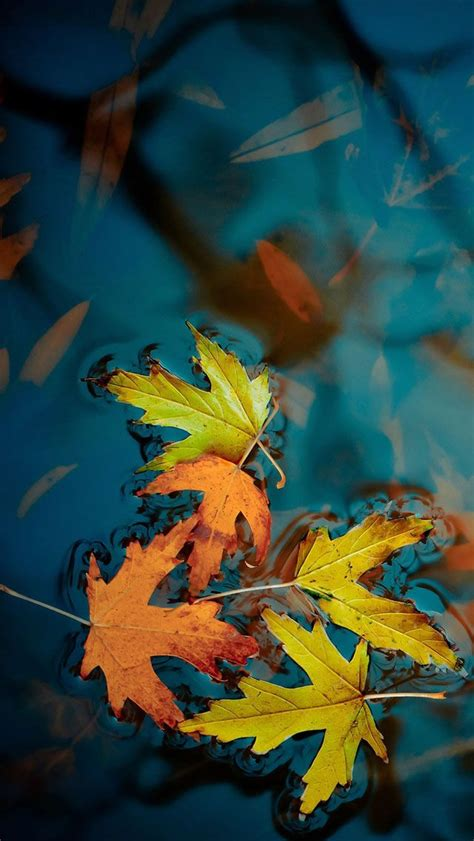 Fall Themed Wallpaper Iphone by 2620 Best Images About Iphone Walls 1 On Happy