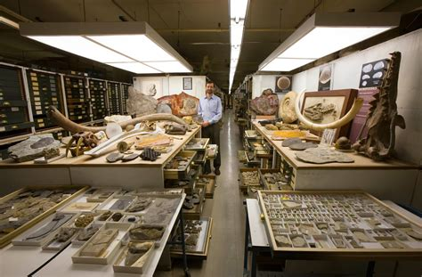 Inside the Secret Collections Backstage at the US Museum
