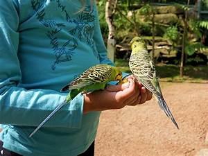 Daunenwaschmittel Wo Kaufen : wo kann ich einen papagei kaufen erfahre jetzt die 13 besten tipps ~ Orissabook.com Haus und Dekorationen