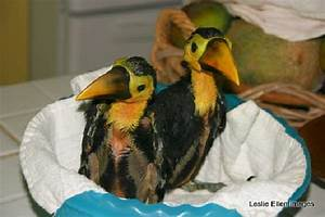 Toucan Rescue Ranch - UPDATED 2017 Reviews & Photos (Costa ...