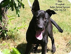 07/26 Zeus | Adopted Dog | A105808 | Yuba City, CA | Great ...