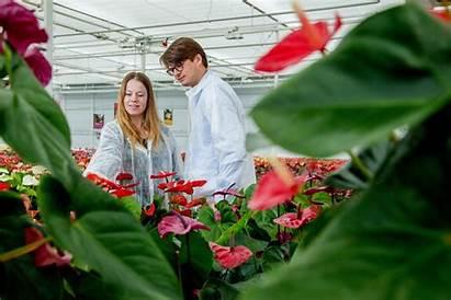 Anthura Greenhouse Bezoek Onze Nieuwe Uw Nieuws