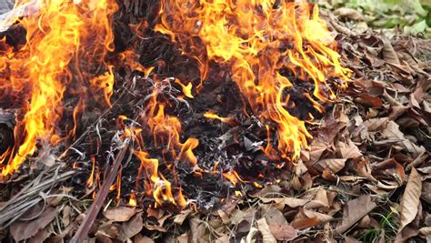 Burning Of Yard Waste, Such Vidéos De Stock (100 % Libres