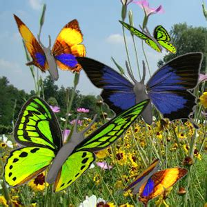 Create Own Animated Wallpapers - butterfly animated color lwp 2 8 apk free