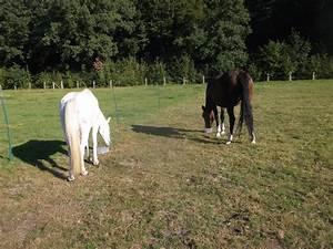 Pferdemist Für Tomaten : pferde tiere gesundheit soziales zeitgeist pferdemist f r den blumengarten ~ Watch28wear.com Haus und Dekorationen
