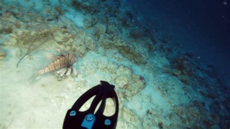 grouper lionfish deep bonaire reef