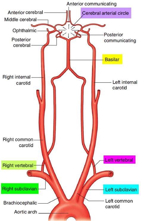 Image result for vertebral artery | Vertebral artery ...