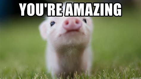 Amazing Meme You Re Amazing Pig Meme Generator