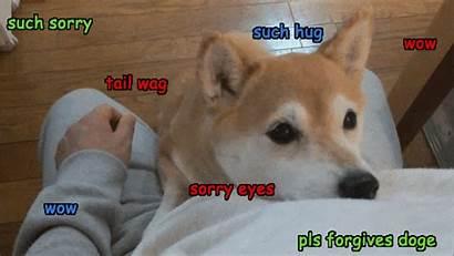 Meme Doge Gifs Giphy