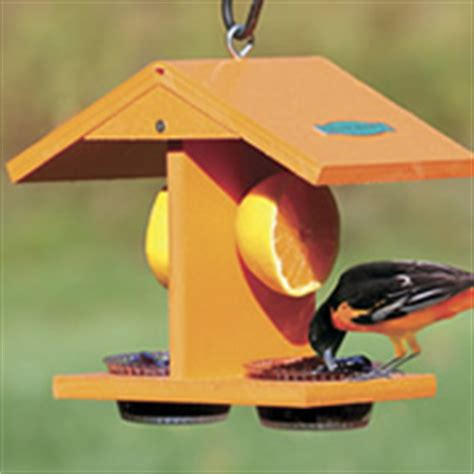 baltimore orioles feeders baltimore oriole bird habits nesting and feeding