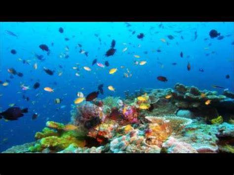 schöne bilder sch 246 ne natur bilder