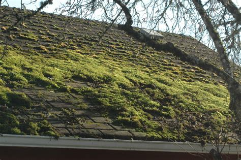 Why Does Moss Grow On Roof Tiles