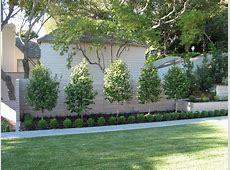 Tree landscape design landscape mediterranean with front