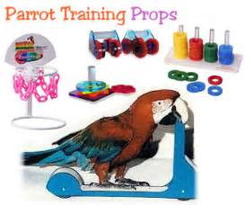 Bird Shower Perch by Perch Factory Bird Props Bird Tricks Parrot Training