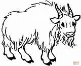 Goat Mountain Coloring Pages Goats Cartoon Drawing Hairy Printables Printable Clipart Animals Farm Clipartpanda Sheep Cliparts Animal Realistic Popular Coloringhome sketch template