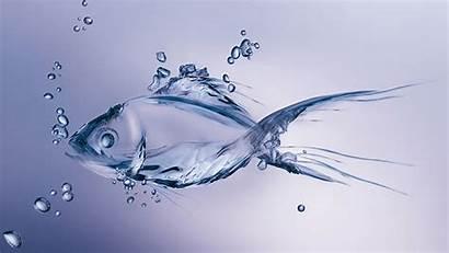 Water Backgrounds Fish Wallpapers Pixelstalk