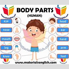Human Body Parts In English  Materials For Learning English
