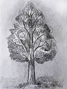 Tree Background Drawing