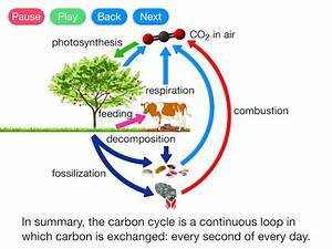 The Carbon Cycle  Video