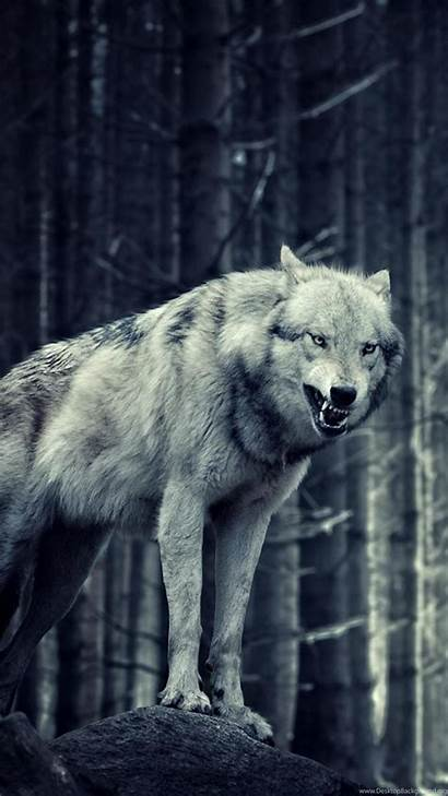 Wolf Iphone Wolves Lone Wallpapers Plus Animals