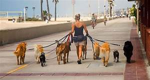 How to find the right dog walker cesar39s way for Puppy dog walker