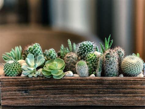 Cactus Vs. Succulent - Cacti And Succulents Identification