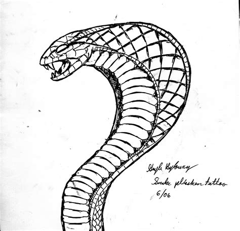 Cobra Drawing At Getdrawingscom Free For Personal Use