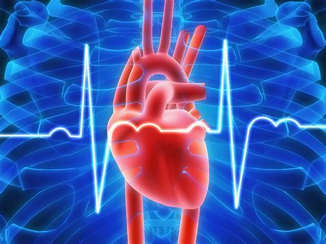 Higher Resting Heart Rate Linked to Higher Mortality