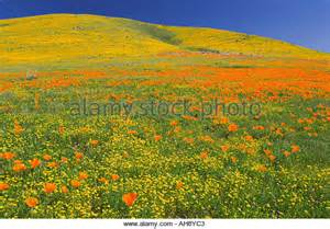 Antelope Poppy Reserve Valley California