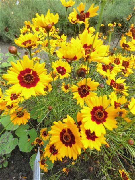 Botanischer Garten Oberholz by Pflanzen Botanischer Garten Oberholz Webseite
