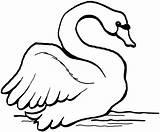 Swan Coloring Trumpeter Printable Animals Preschool Drawings Designlooter Mute Coloringbay sketch template