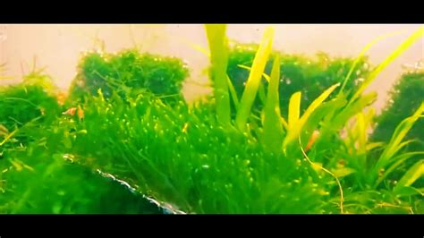 Aquascaping Tips by Aquascape Tips Moss In Aquascaping