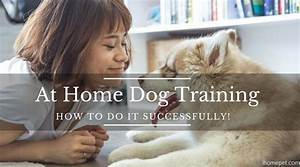 at home dog training how to do it successfully ihome pets With dog training at home