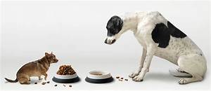 how much to feed your dog puppy