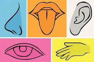 [Los 5 sentidos] TODA La Información Que Buscabas
