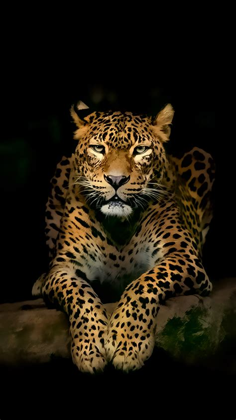 Android Animal Wallpaper - serious leopard 3d spots illustration animal android
