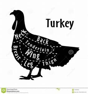 Cut Of Turkey  Diagram For Butcher  Poster For Butcher
