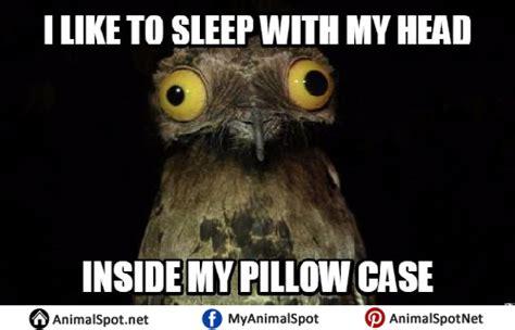 Bird Shit Meme - bird shit meme 28 images bird poop brings good luck okay guy quickmeme funny animal memes