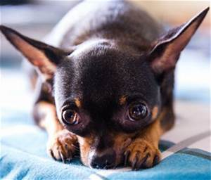 can your depression affect your pet