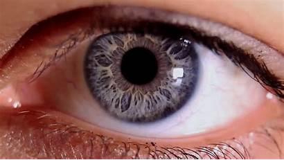 Getting Rid Blindness Leading Iris Eye Human
