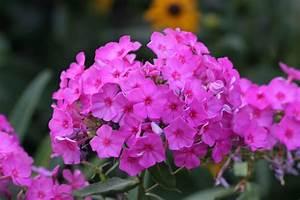 Blumen Im Juli : bl tenstauden im juli mein sch ner garten ~ Lizthompson.info Haus und Dekorationen