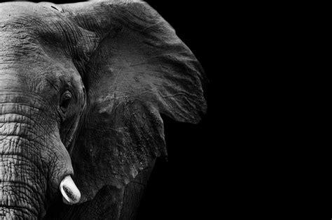 idea  paul strauss  tat ideas elephant photography