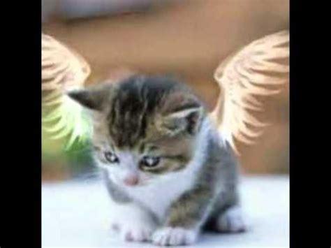 Willhaben Badezimmermöbel Zu Verschenken by Katzen Zu Verschenken