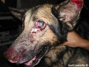 Working in Morocco – Recurring leishmaniasis in a canine ...