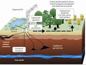 Greenhouse Effect  U0026 Global Warming