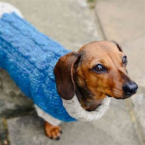 dog jumper knitting kit dachshund size