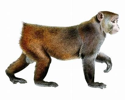Monkey Animals Transparent Background Pngimg Animal Backgrounds