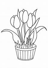 Coloring Flowers Pages Tulip Printable sketch template
