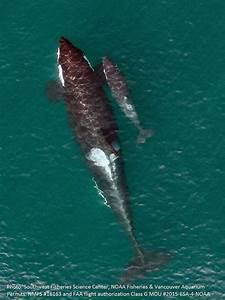 Baby Orcas And Gloomy Future  Can Whale Watching Help