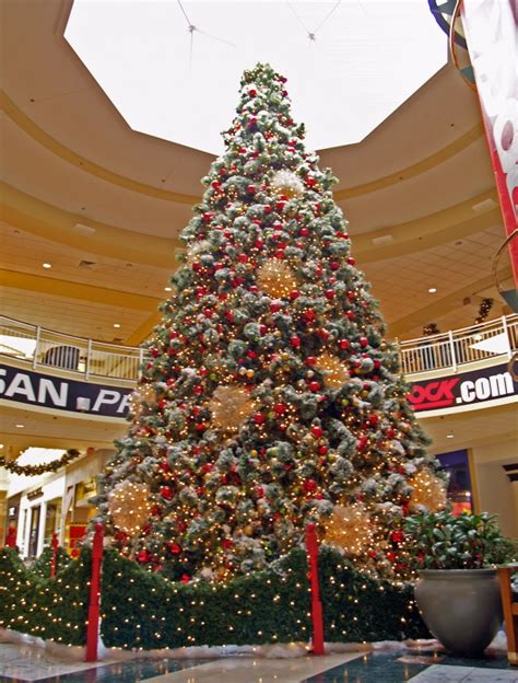 Top Live Christmas Trees by A Mall Tree Picture By Unclejimmy For Christmas Trees